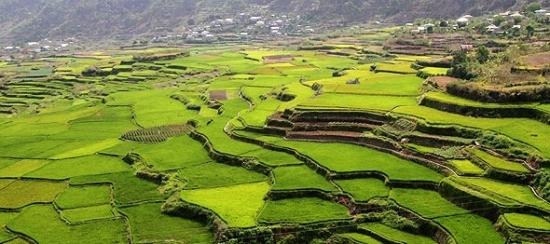 sagada-rice-terrace-farm-green-fields-philippines